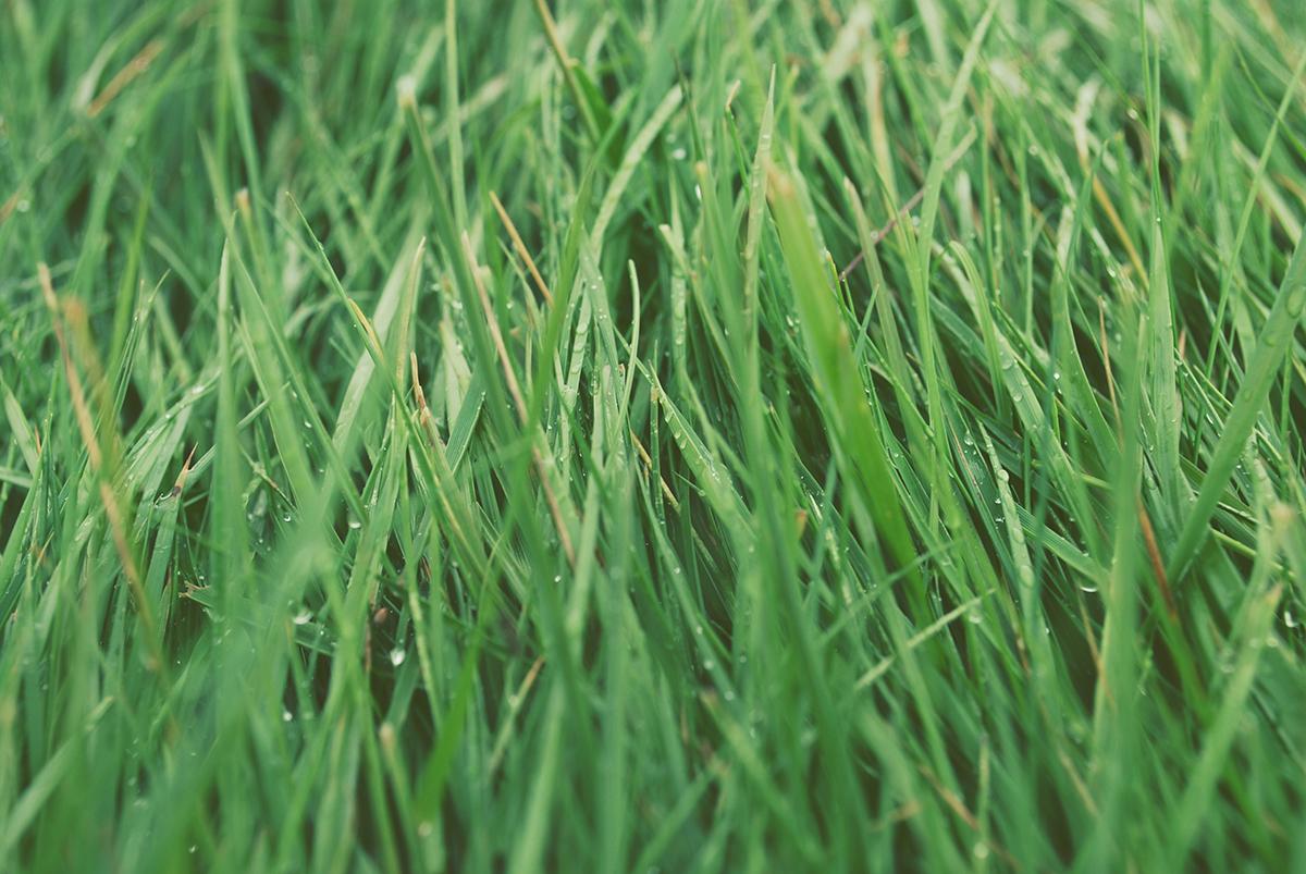 Yin Holz Daymaster sind wie Gras