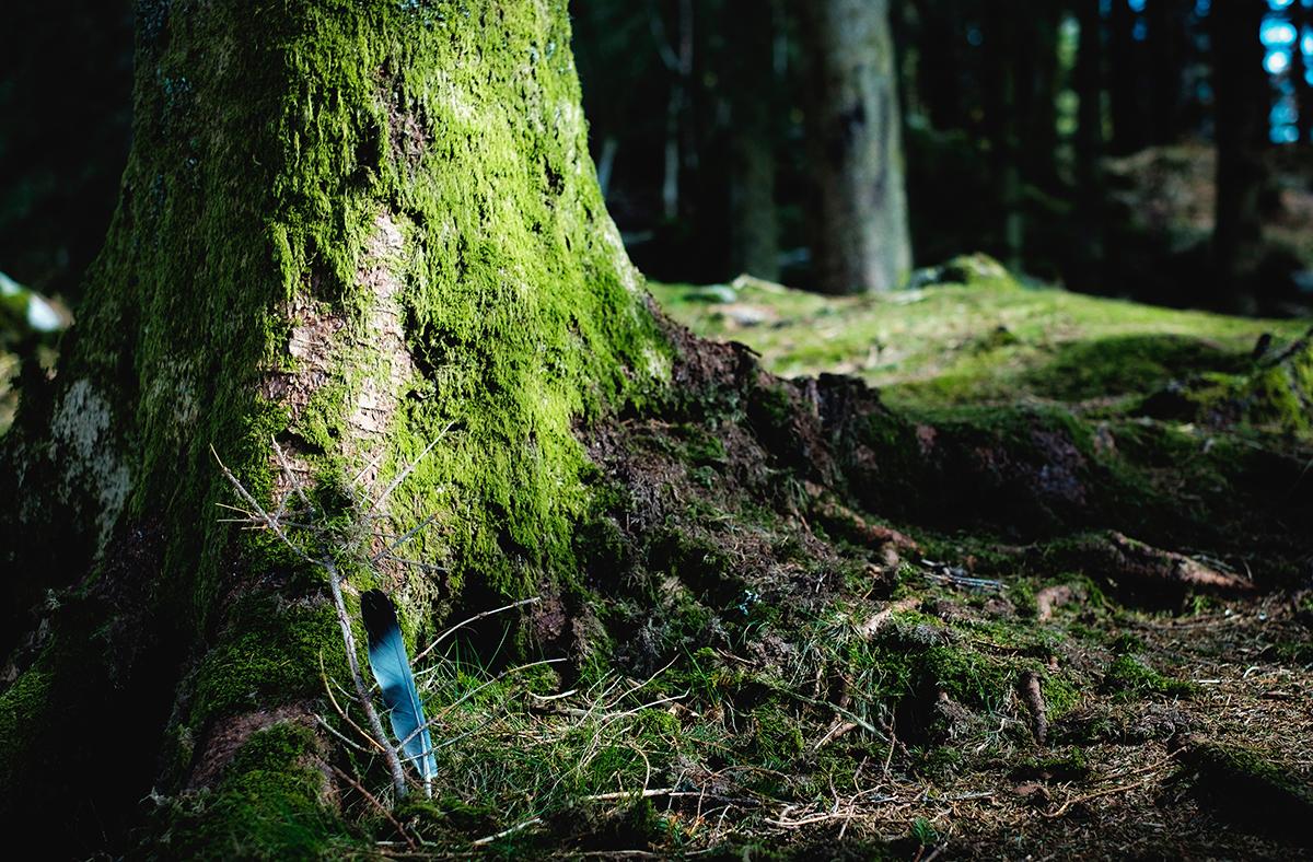 Yang Holz Daymaster sind große Bäume